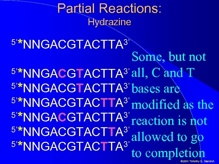 Partial Reactions: Hydrazine 5' *NNGACGTACTTA 3' Some, but not 5'*NNGACGTACTTA 3' all, C and