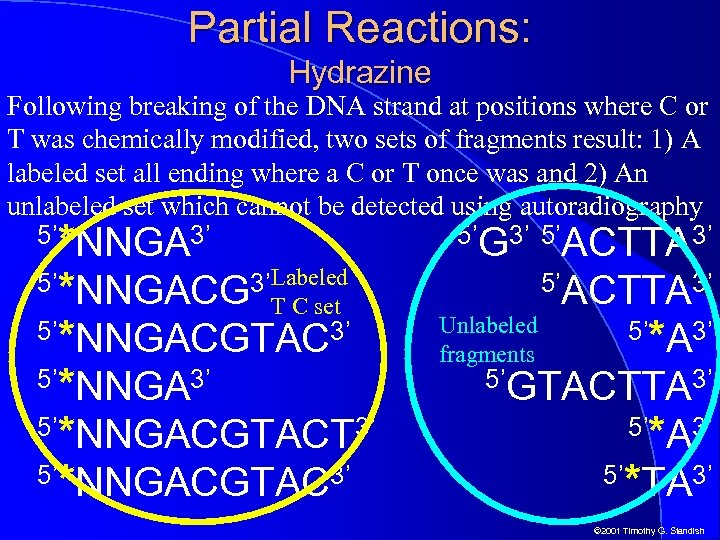 Partial Reactions: Hydrazine Following breaking of the DNA strand at positions where C or