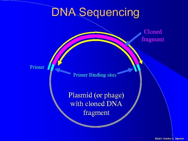 DNA Sequencing Cloned fragment Primer Binding sites Plasmid (or phage) with cloned DNA fragment