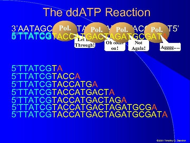 The dd. ATP Reaction Pol. 3'AATAGCATGGTACTGATCTTACGCTAT 5' Pol. 5'TTATCGTACCATGACTAGA 5'TTATCGTACCATGACTAGATGCGATA Let me Through! Oh