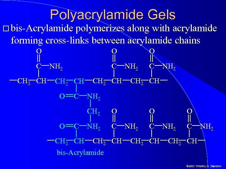 Polyacrylamide Gels bis-Acrylamide polymerizes along with acrylamide forming cross-links between acrylamide chains O C