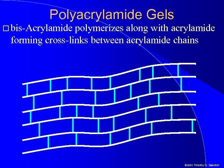 Polyacrylamide Gels bis-Acrylamide polymerizes along with acrylamide forming cross-links between acrylamide chains © 2001
