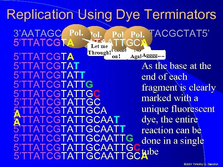 Replication Using Dye Terminators Pol. 3'AATAGCATAACGTTACGCTAT 5' 5'TTATCGTACCATAATTGCA 5'TTATCGTACCATAATT 5'TTATCGTACCACme 5'TTATCGTA Let Oh come