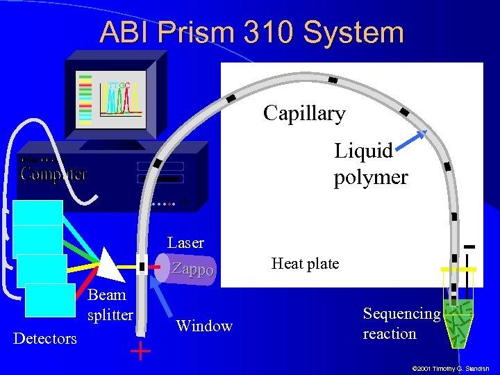 ABI Prism 310 System ATTGC A Capillary Liquid polymer …. . - Laser Zappo