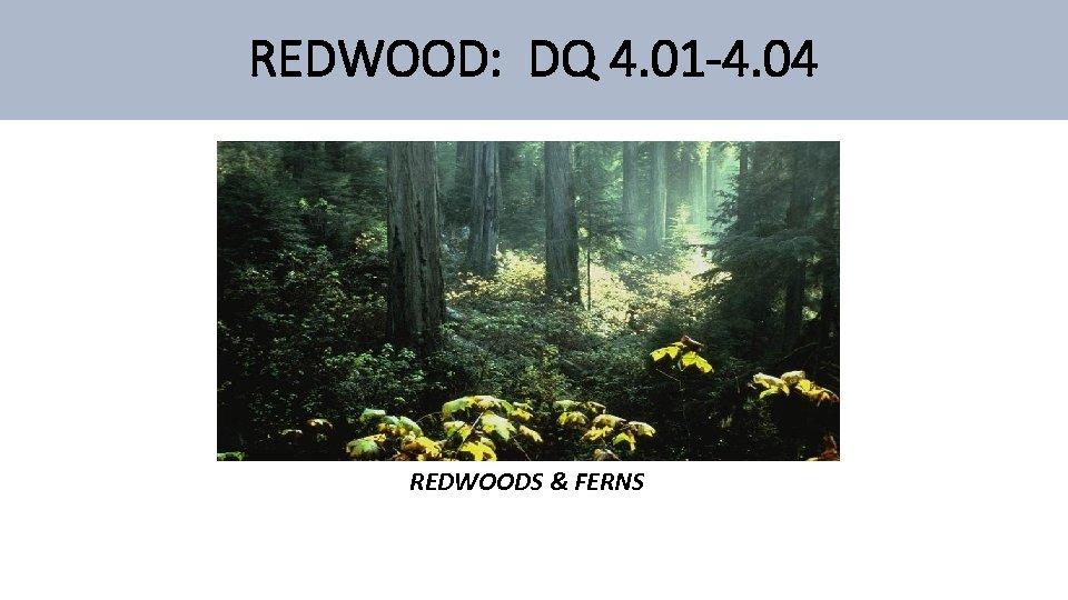 REDWOOD: DQ 4. 01 -4. 04 REDWOODS & FERNS