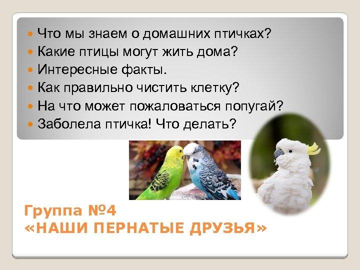 Что мы знаем о домашних птичках? Какие птицы могут жить дома? Интересные факты. Как