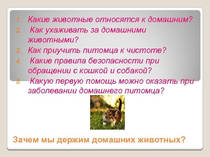 1. 2. 3. 4. 5. Какие животные относятся к домашним? Как ухаживать за домашними