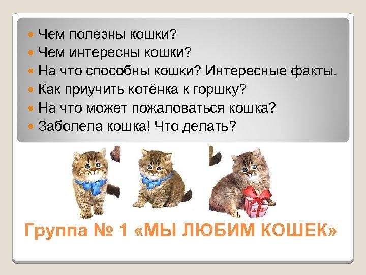 Чем полезны кошки? Чем интересны кошки? На что способны кошки? Интересные факты. Как приучить