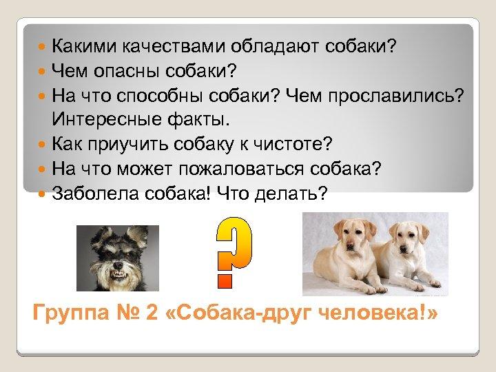 Какими качествами обладают собаки? Чем опасны собаки? На что способны собаки? Чем прославились? Интересные
