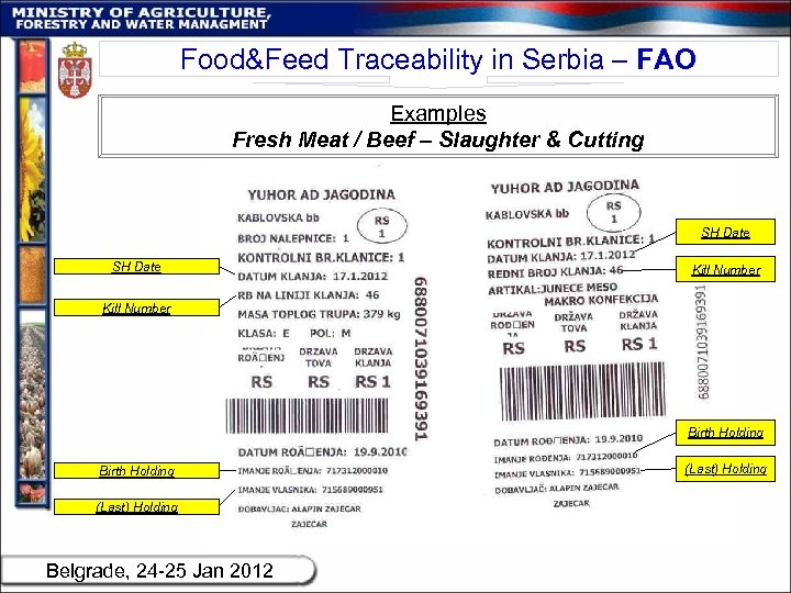 Food&Feed Traceability in Serbia – FAO Examples Fresh Meat / Beef – Slaughter &