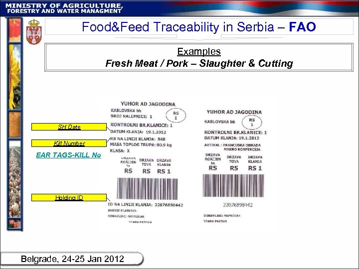 Food&Feed Traceability in Serbia – FAO Examples Fresh Meat / Pork – Slaughter &