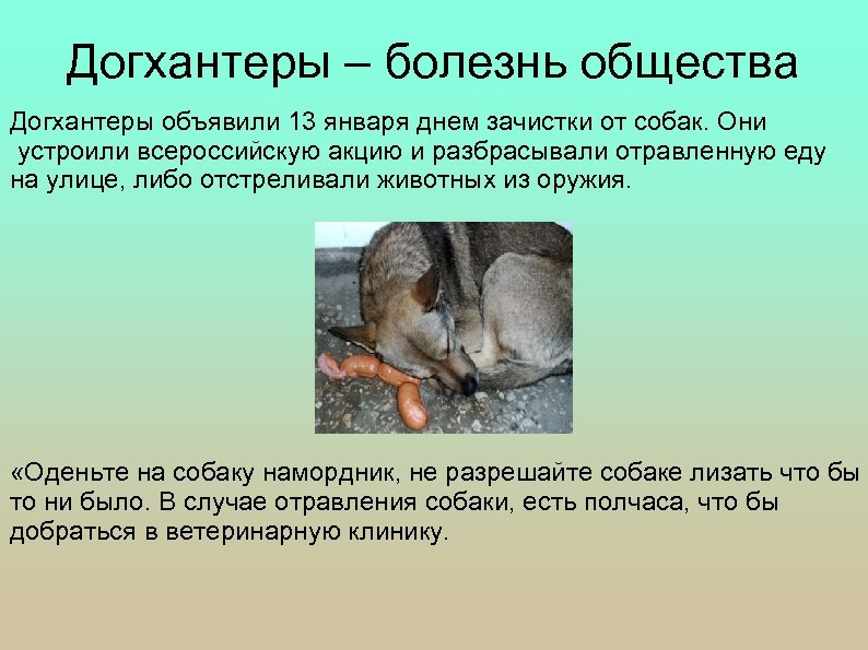 Догхантеры – болезнь общества Догхантеры объявили 13 января днем зачистки от собак. Они устроили