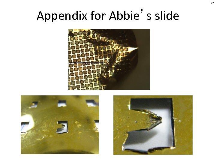 77 Appendix for Abbie's slide