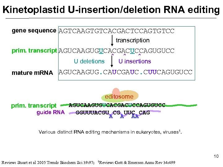 Kinetoplastid U-insertion/deletion RNA editing gene sequence AGTCAAGTGTCACGACTCCAGTGTCC transcription prim. transcript AGUCAAGUGUCACGACUCCAGUGUCC U deletions mature