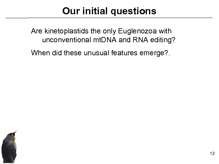 Our initial questions Are kinetoplastids the only Euglenozoa with unconventional mt. DNA and RNA