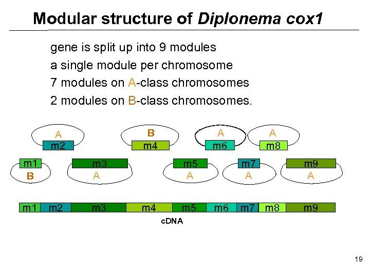 Modular structure of Diplonema cox 1 gene is split up into 9 modules a