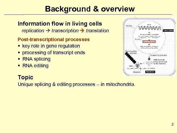Background & overview Information flow in living cells replication transcription translation Post-transcriptional processes §