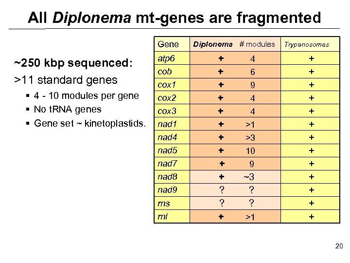 All Diplonema mt-genes are fragmented Gene ~250 kbp sequenced: >11 standard genes § 4