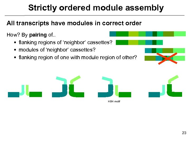 Strictly ordered module assembly All transcripts have modules in correct order How? By pairing