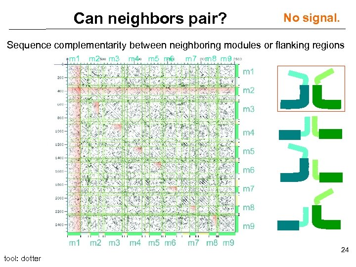 Can neighbors pair? No signal. Sequence complementarity between neighboring modules or flanking regions m