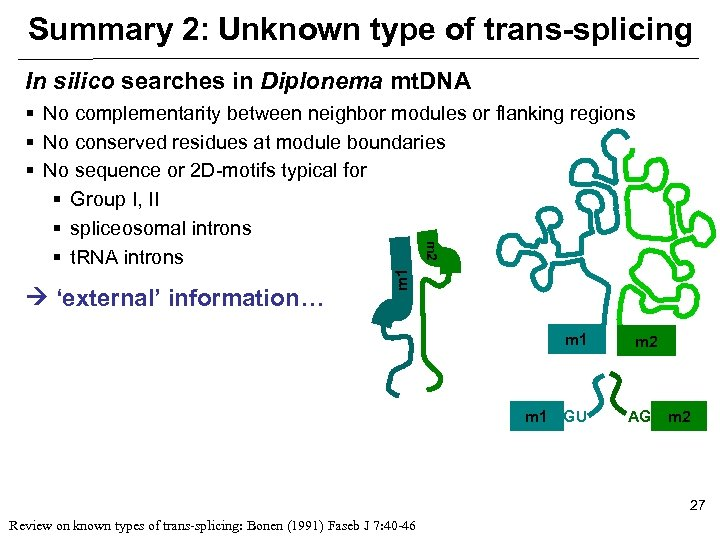 Summary 2: Unknown type of trans-splicing In silico searches in Diplonema mt. DNA 'external'
