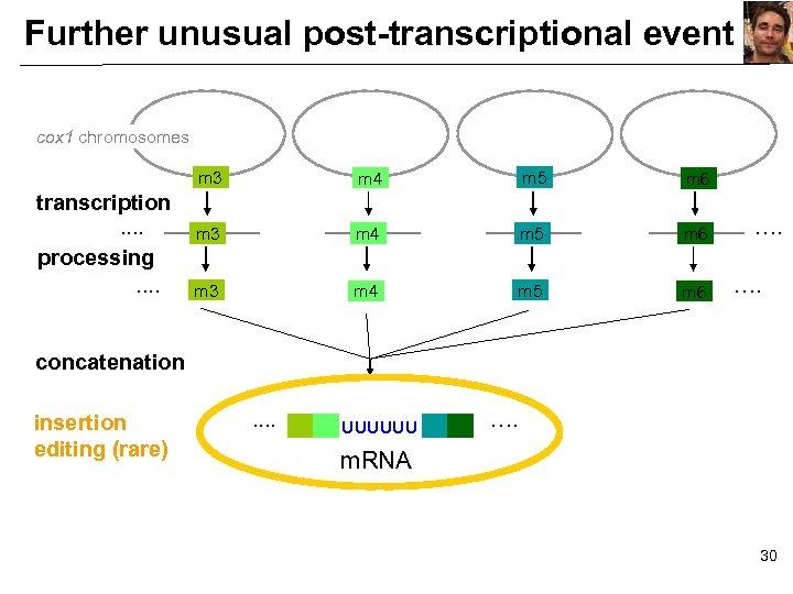 Further unusual post-transcriptional event cox 1 chromosomes m 3 transcription. . processing. . m