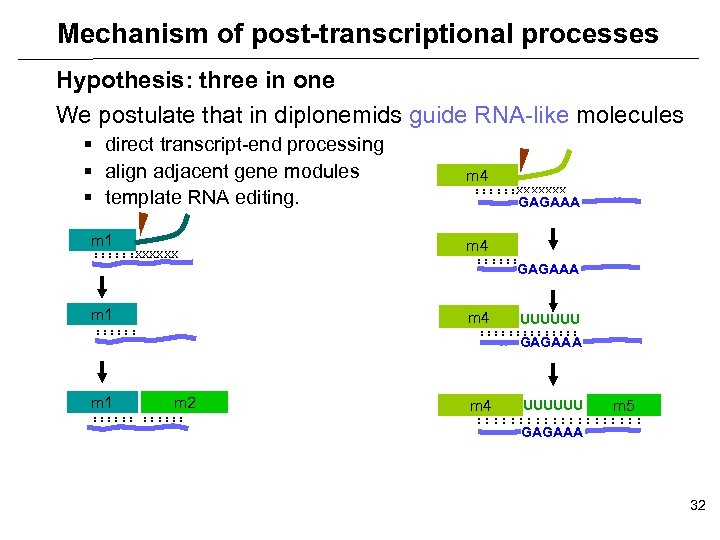 Mechanism of post-transcriptional processes Hypothesis: three in one We postulate that in diplonemids guide