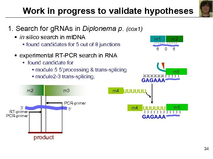Work in progress to validate hypotheses 1. Search for g. RNAs in Diplonema p.