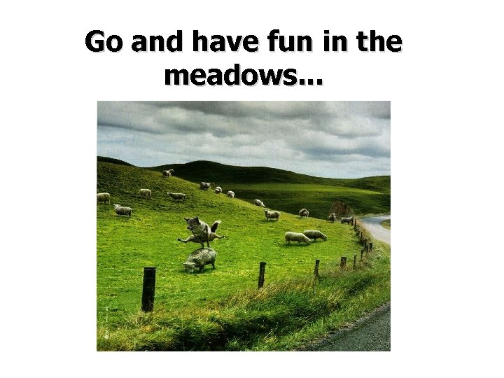 Go and have fun in the meadows. . .