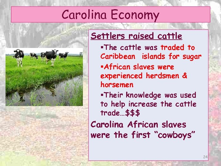 Carolina Economy Settlers raised cattle §The cattle was traded to Caribbean islands for sugar