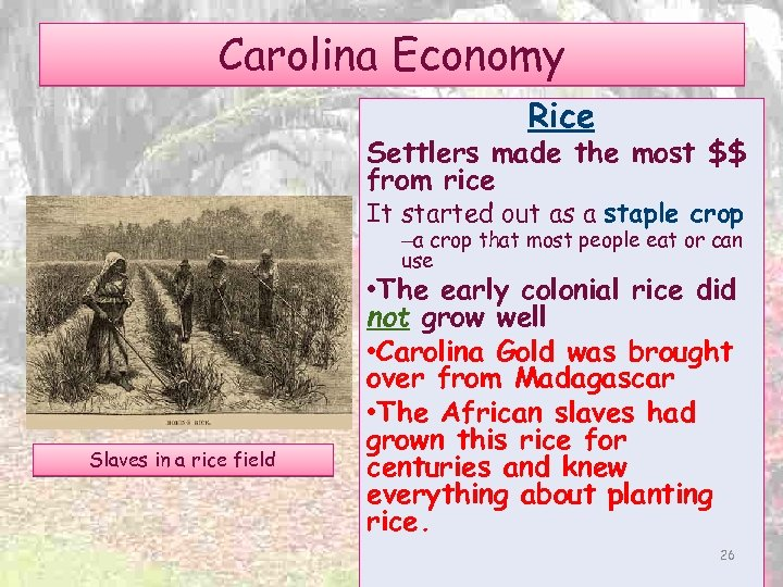 Carolina Economy Rice Settlers made the most $$ from rice It started out as