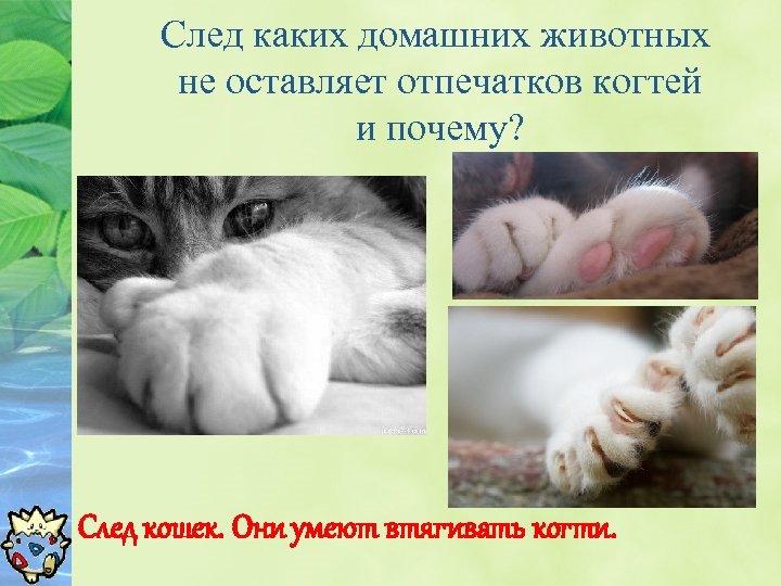 След каких домашних животных не оставляет отпечатков когтей и почему? След кошек. Они умеют