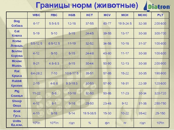 Границы норм (животные) WBC RBC HGB HCT MCV MCHC PLT Dog Собака 6 -17