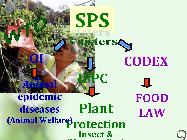 SPS OI E CODEX IPPC Animal epidemic diseases (Animal Welfare) Plant Protection Insect &