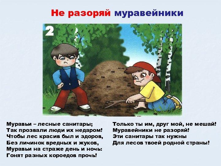 Не разоряй муравейники Муравьи – лесные санитары; Так прозвали люди их недаром! Чтобы лес
