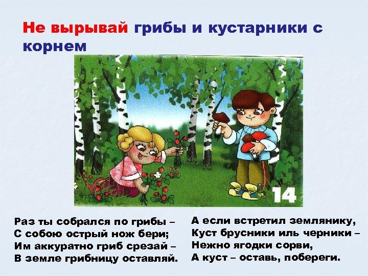 Не вырывай грибы и кустарники с корнем Раз ты собрался по грибы – С
