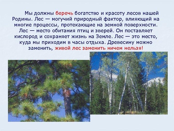 Мы должны беречь богатство и красоту лесов нашей Родины. Лес — могучий природный