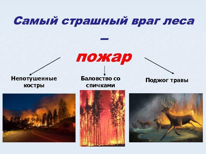 Самый страшный враг леса – пожар Непотушенные костры Баловство со спичками Поджог травы
