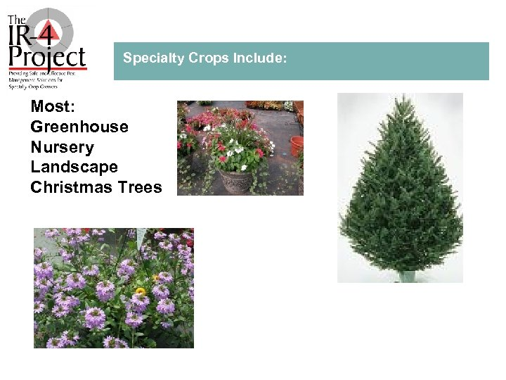 Specialty Crops Include: Most: Greenhouse Nursery Landscape Christmas Trees