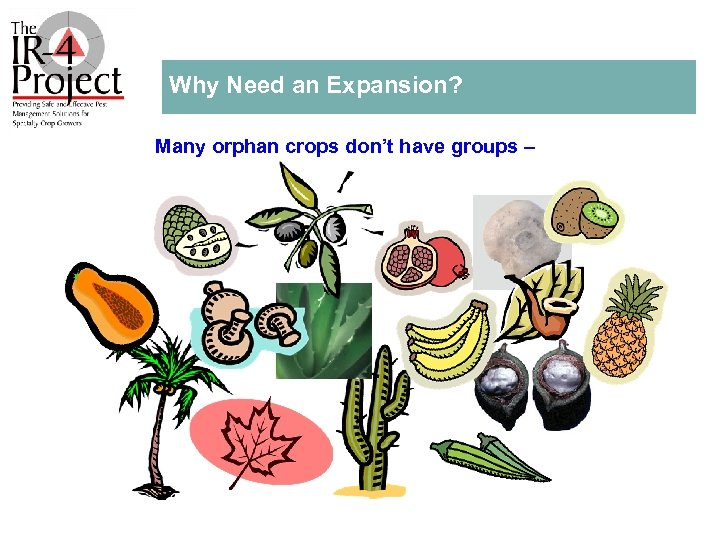 Why Need an Expansion? Many orphan crops don't have groups –