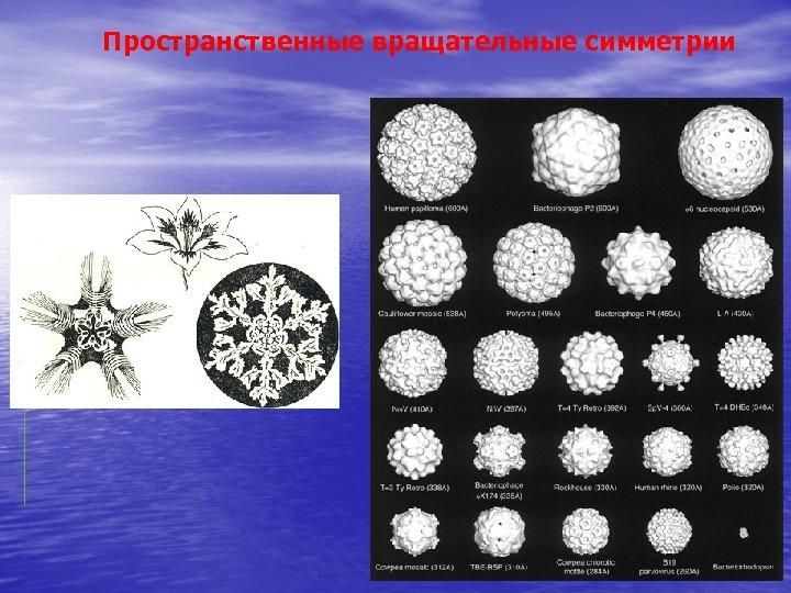 Пространственные вращательные симметрии
