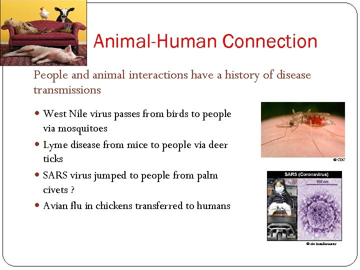 Animal-Human Connection People and animal interactions have a history of disease transmissions West Nile