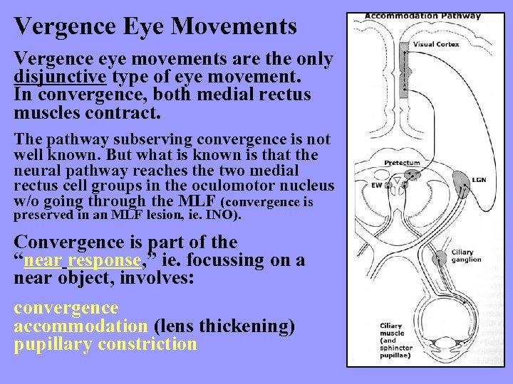 Vergence Eye Movements Vergence eye movements are the only disjunctive type of eye movement.