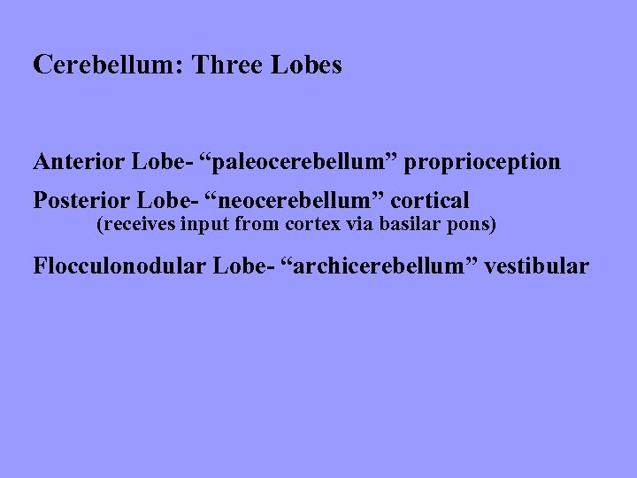 "Cerebellum: Three Lobes Anterior Lobe- ""paleocerebellum"" proprioception Posterior Lobe- ""neocerebellum"" cortical (receives input from"