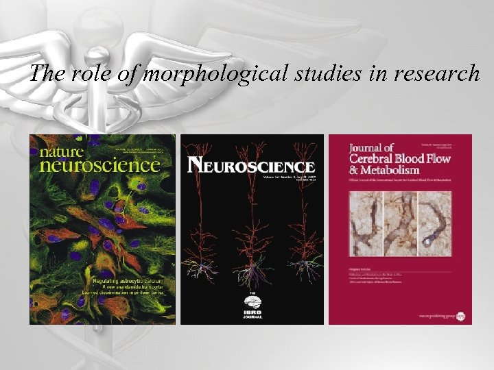 The role of morphological studies in research