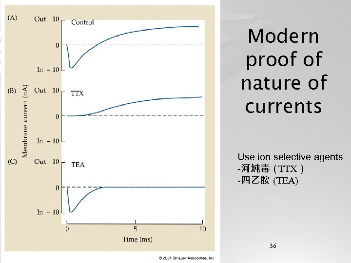 Modern proof of nature of currents Use ion selective agents -河魨毒(TTX) -四乙胺 (TEA) 36