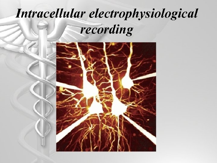 Intracellular electrophysiological recording
