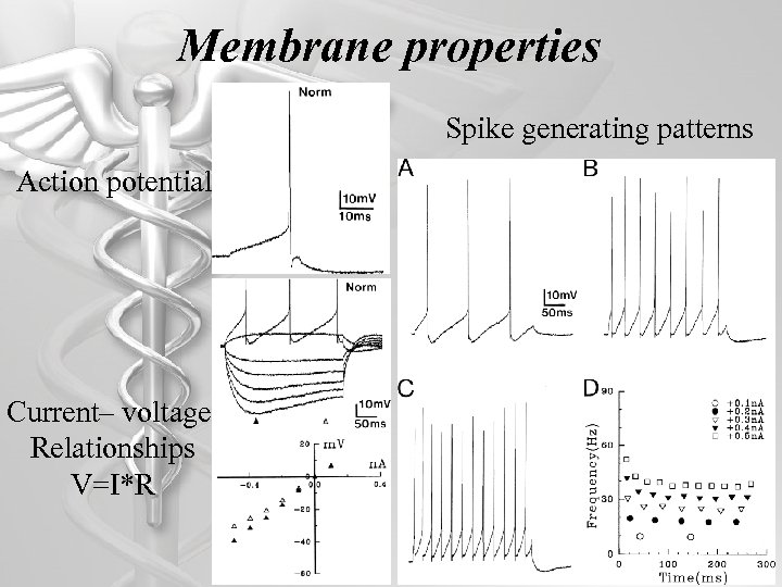 Membrane properties Spike generating patterns Action potential Current– voltage Relationships V=I*R