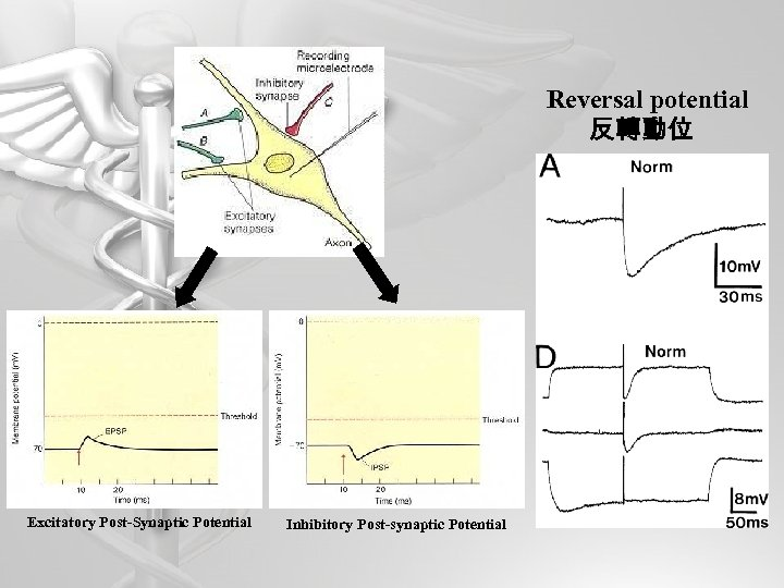 Reversal potential 反轉動位 Excitatory Post-Synaptic Potential Inhibitory Post-synaptic Potential