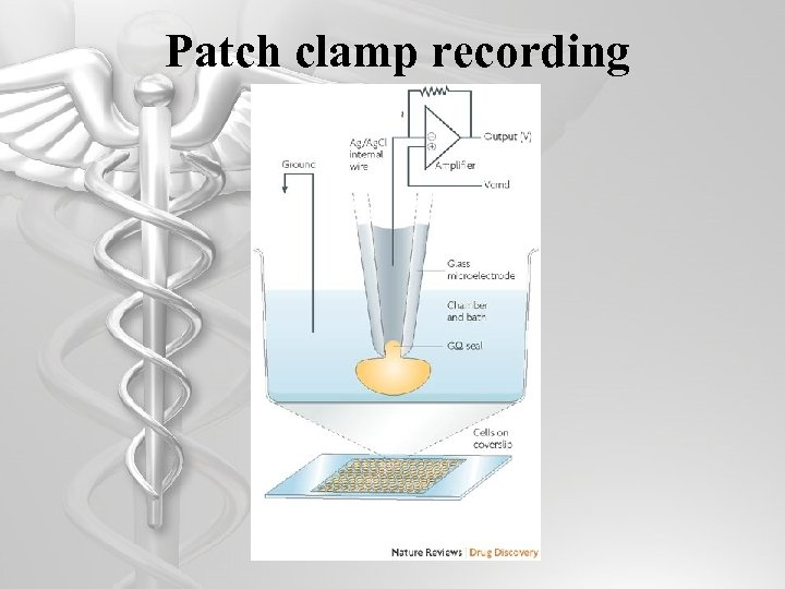 Patch clamp recording